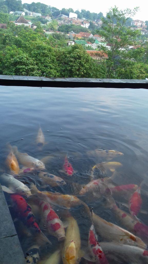 Ikan Koi di Restaurant Pajajaran Suites Hotel Bogor
