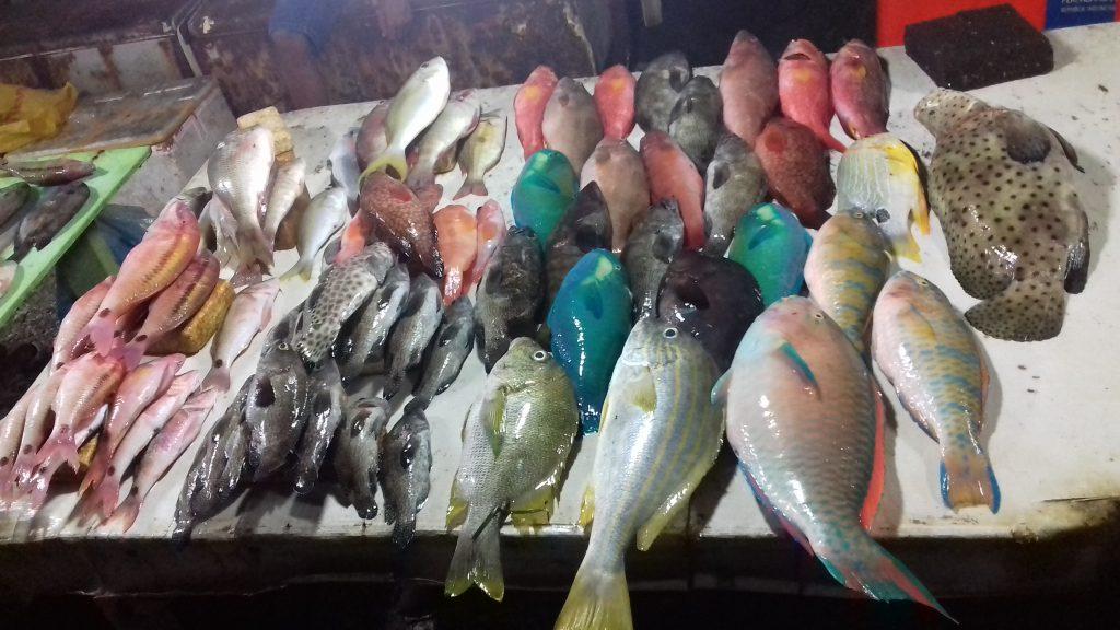 Warna-Warni Ikan di Pasar Ikan Kelapa Lima, Kupang